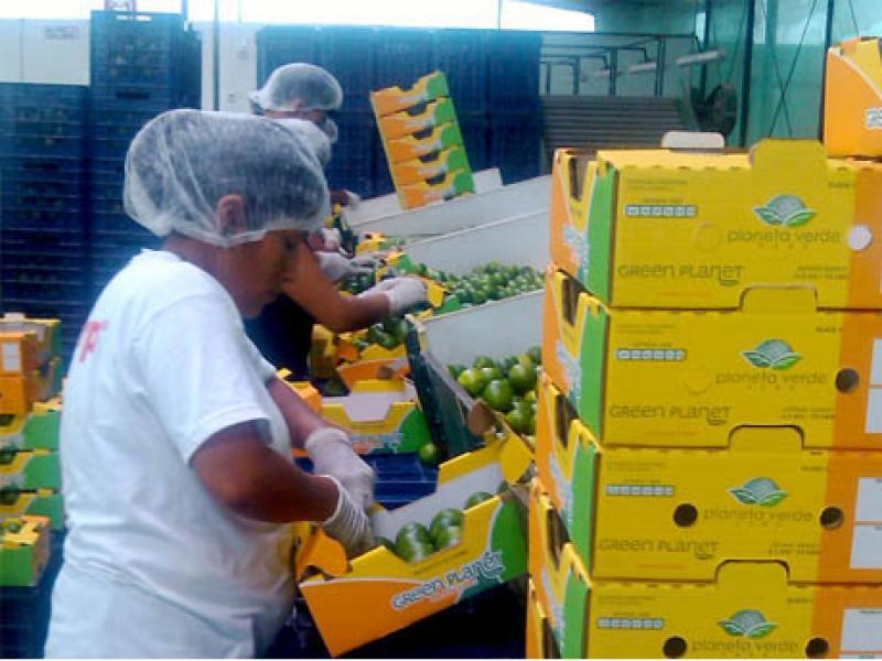 Exportaciones peruanas de limones Tahití están en proceso de ampliación