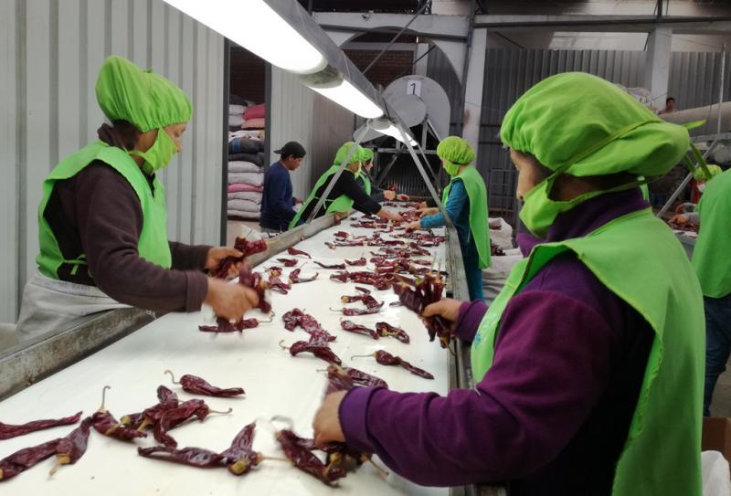 Exportaciones peruanas de páprika caen en valor 5% de enero a agosto de 2020
