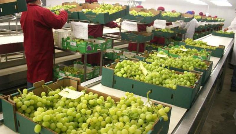 Exportaciones peruanas de uvas de mesa frescas crecieron 27.9% en los cuatro primeros meses del 2021