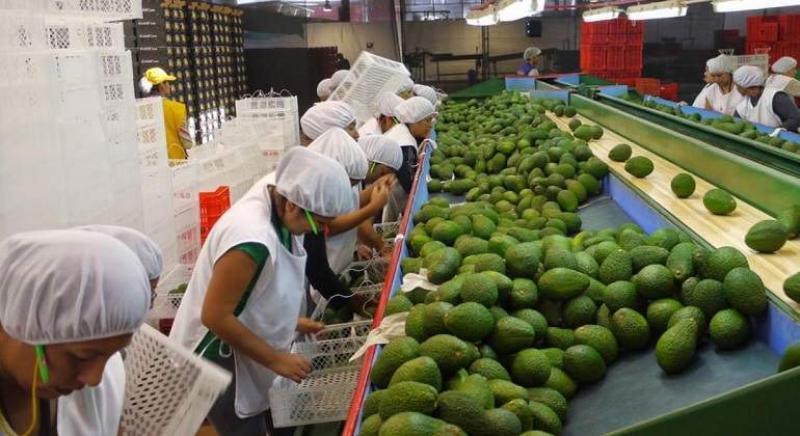 Exportaciones podrían llegar a los US$ 75.000 millones al Bicentenario