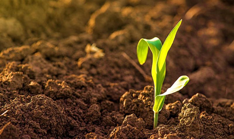 Facultad de Agronomía de la UNALM realizará el III Curso de Actualización Profesional en Suelos