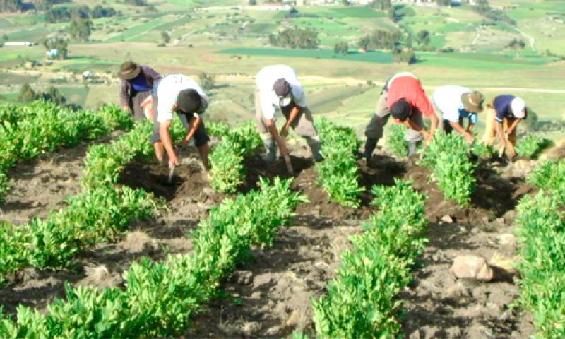 FAO: Agricultura de la región Ayacucho será la más afectada por el cambio climático