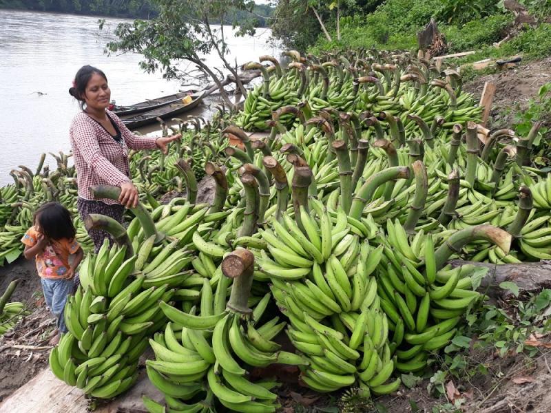 FAO ejecuta proyectos de cooperación a favor del Perú en el contexto del Covid-19