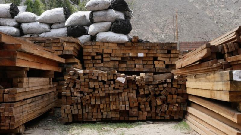 Gobierno aprueba reglamento de infracciones y sanciones a la legislación forestal y de fauna silvestre