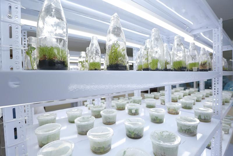 Gobierno continuará promoviendo proyectos de investigación científica, innovación y tecnología agraria hasta el 2020