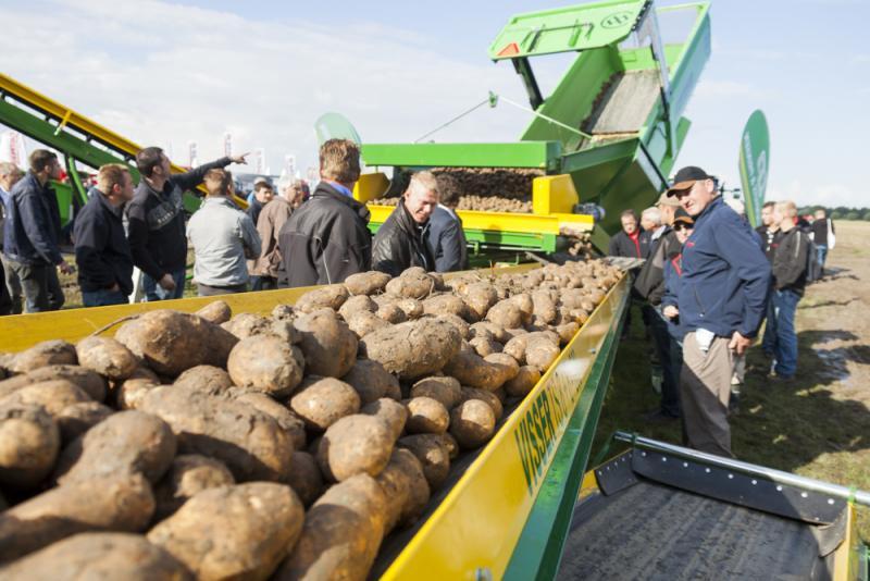Habrá menos superficie de papas en el norte de la Unión Europea por falta de plantas