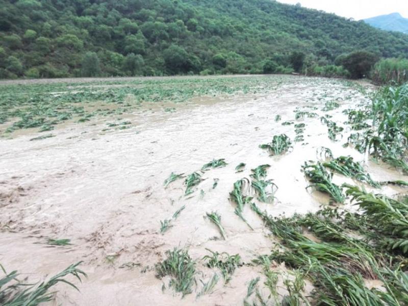 Hay 6.8 millones de áreas cultivadas en riesgo por huaycos e inundaciones