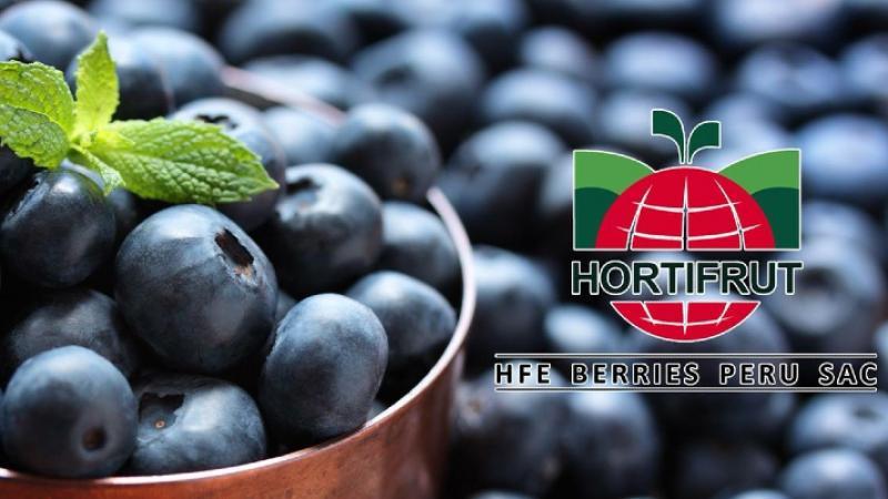 Hortifrut registró un EBITDA de US$ 205.05 millones, aumentando en 68.61%