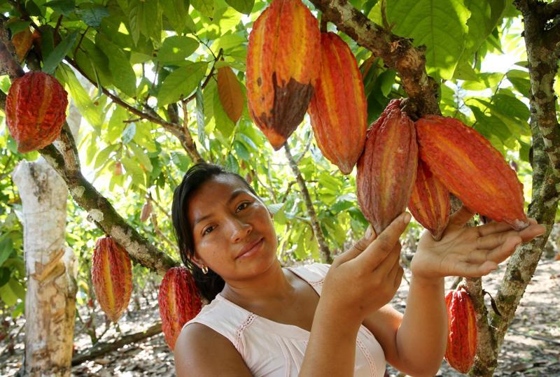 Hoy se celebra el Día del cacao y chocolate peruano