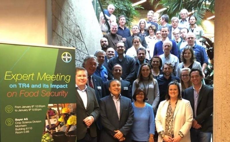 IICA, Bayer y actores de la industria frutícola mundial combatirán juntos la plaga del banano Fusarium R4T