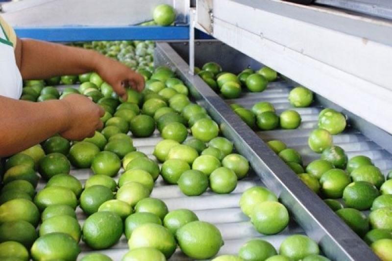 IICA y OMC capacitarán a profesionales de 11 países de ALC en la aplicación de medidas sanitarias para el comercio agroalimentario