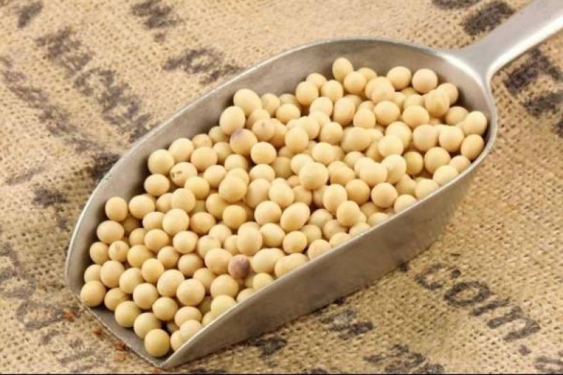 Importaciones de soya en grano llegaron a casi US$ 60 millones en el primer semestre