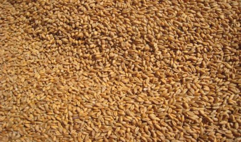 Importaciones de trigo duro cayeron 21% durante el 2019
