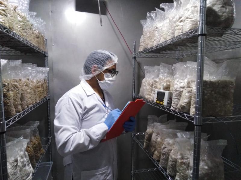 Impulsan uso de energía solar para la producción de semillas de hongos comestibles de alta calidad