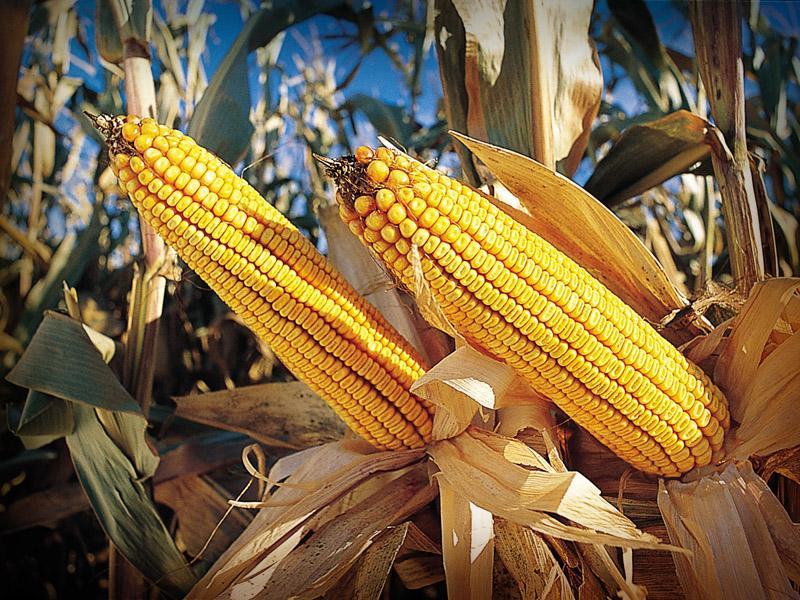 Incremento de lluvias abre camino a mejoras en diez productos agrícolas