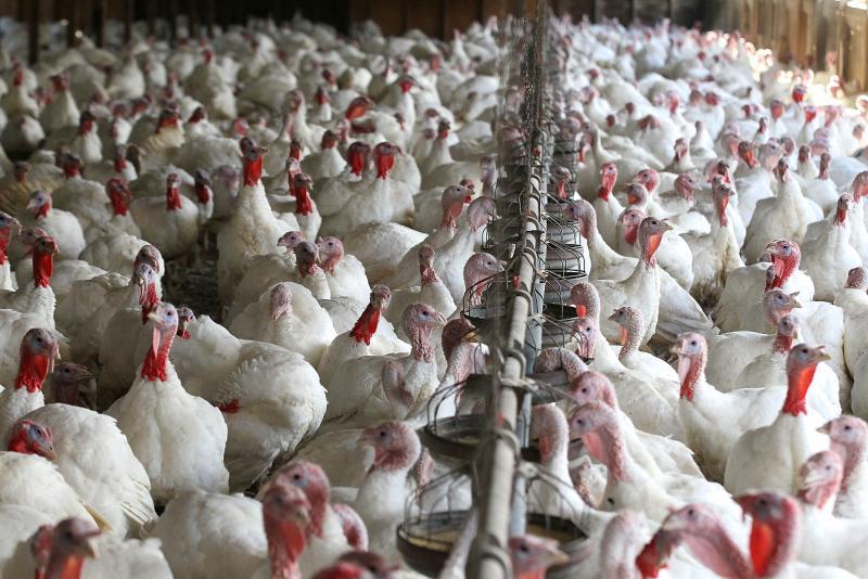 Industria avícola nacional está enfocada en asegurar calidad y salubridad de los productos