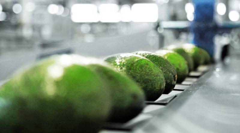 Industria de máquinas clasificadoras de frutas ve con expectativa el mercado peruano