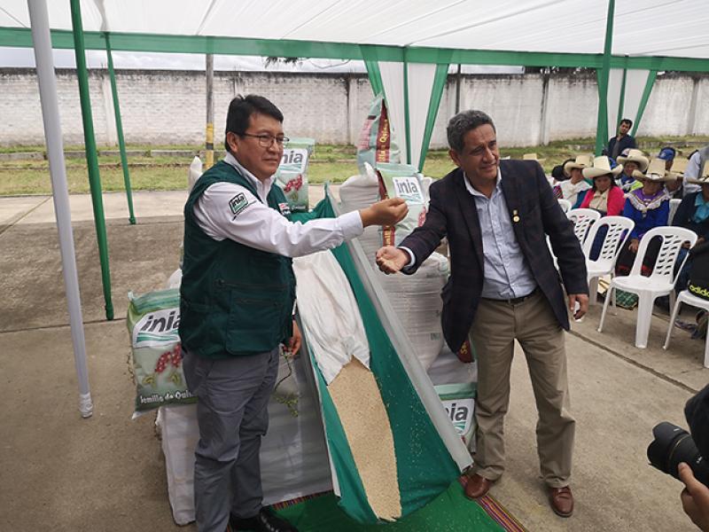 """INIA libera variedad de quinua """"Roja del Norte"""" con mayor productividad y resistente a plagas"""