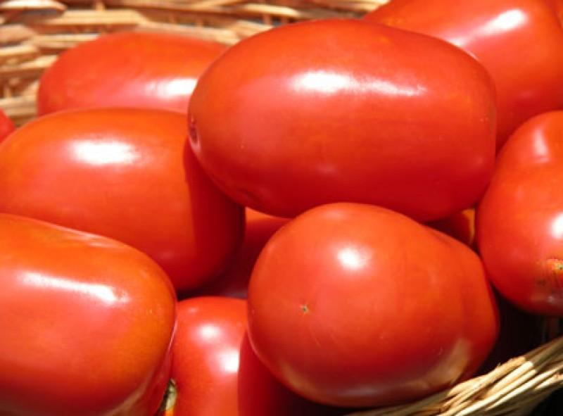 Junio: exportaciones de tomate crecen y alcanzan 955 toneladas