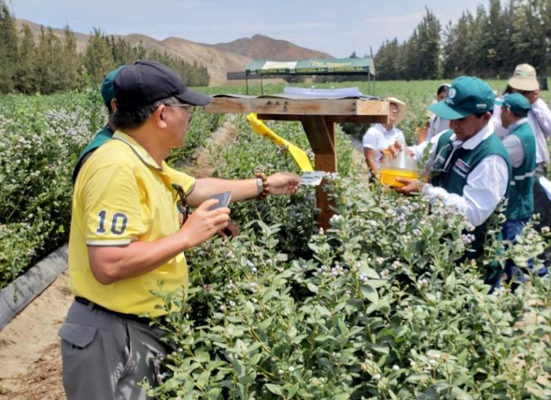 La Libertad será sostenible con erradicación de las moscas de la fruta