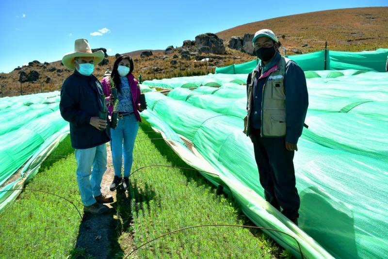 La Libertad: Vivero Herecre producirá más de 850 mil plantones de pinos que serán sembrados este año