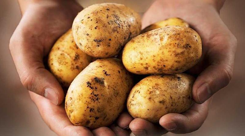 La papa es el tercer alimento que más se desperdicia en Perú