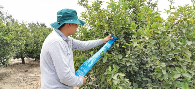 Lambayeque: red de vigilancia de mosca de la fruta beneficiará a más de 13 mil productores