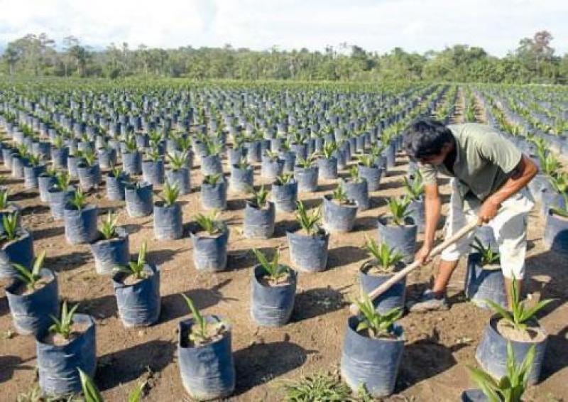 Lambayeque: reforestarán 17.740 hectáreas del área de influencia de Udima