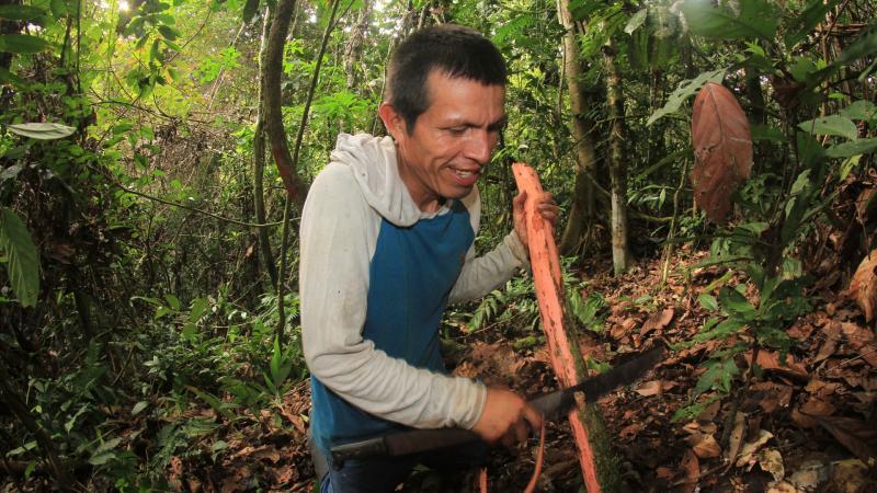 Las plantas medicinales son claves en la fórmula de desarrollo de las comunidades indígenas del país