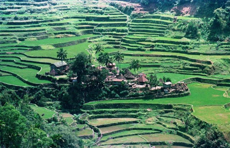 Lo que nos revela el Atlas de la Superficie Agrícola del Perú: Expansión de áreas, destrucción del bosque y dicotomía en productividad.