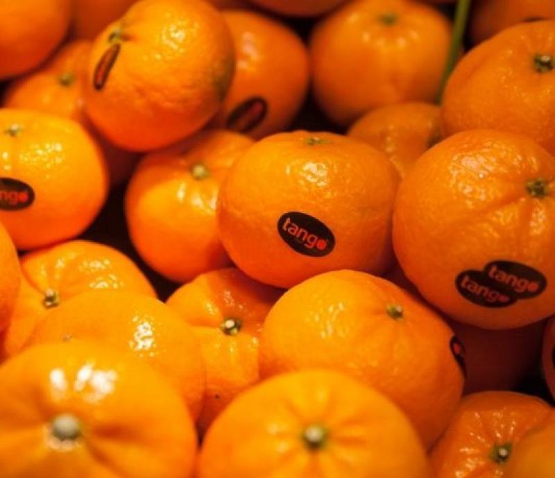 Mandarina y naranja frescas de España ya pueden ingresar a Perú