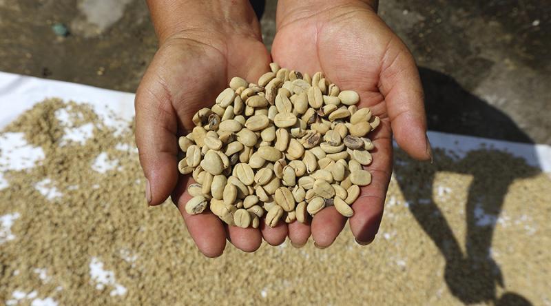 Más de 1.000 campesinos certificados garantizan alimentos de calidad en el país