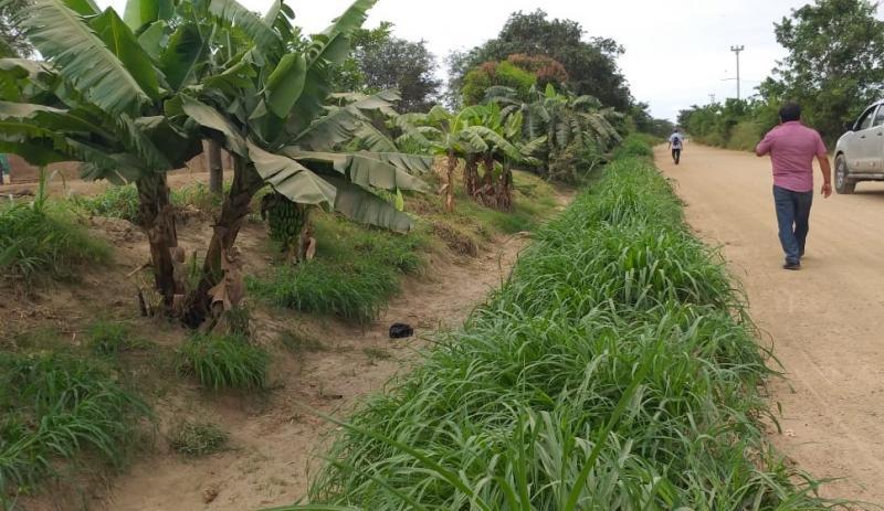 Más de 55 mil familias agricultoras se beneficiarán con el mantenimiento de 232 canales de riego