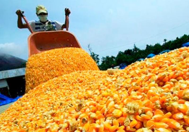 MEF actualizó Sistema de Franja de Precios a la importación de maíz, azúcar, arroz y lácteos