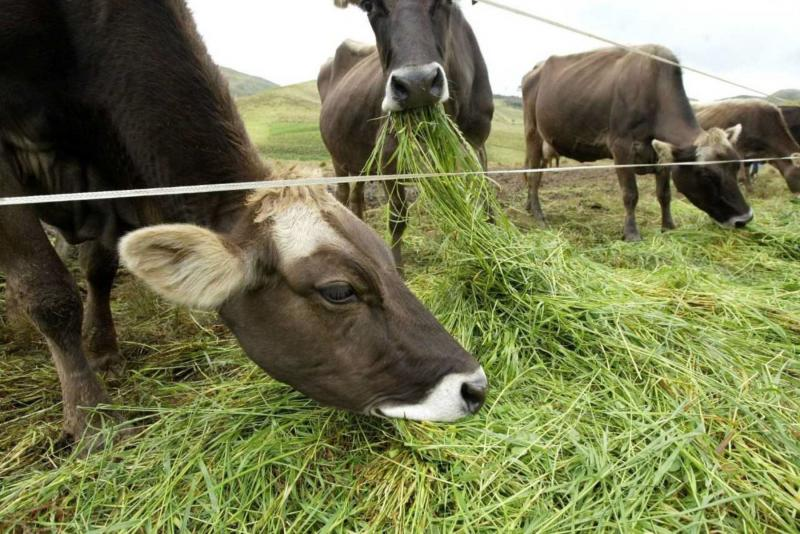 MEF transfiere S/ 35.1 millones para agro y protección del ganado del friaje
