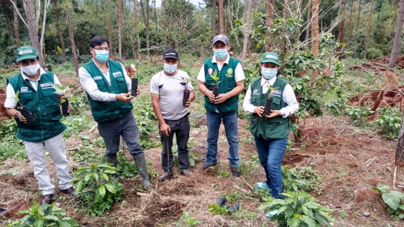 Minagri instala 500 plantones de árbol de la quina en la zona del Vraem