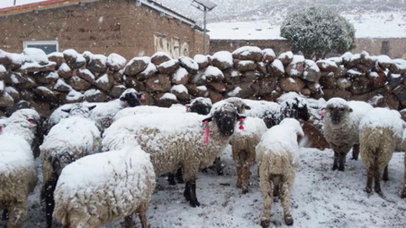 Minagri monitorea efectos de heladas y nevadas en cultivos y ganado