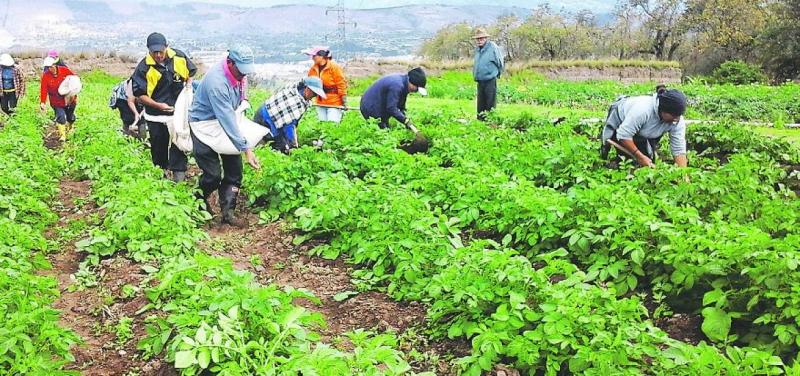 Minagri presentará programa de fortalecimiento de cooperativas ...