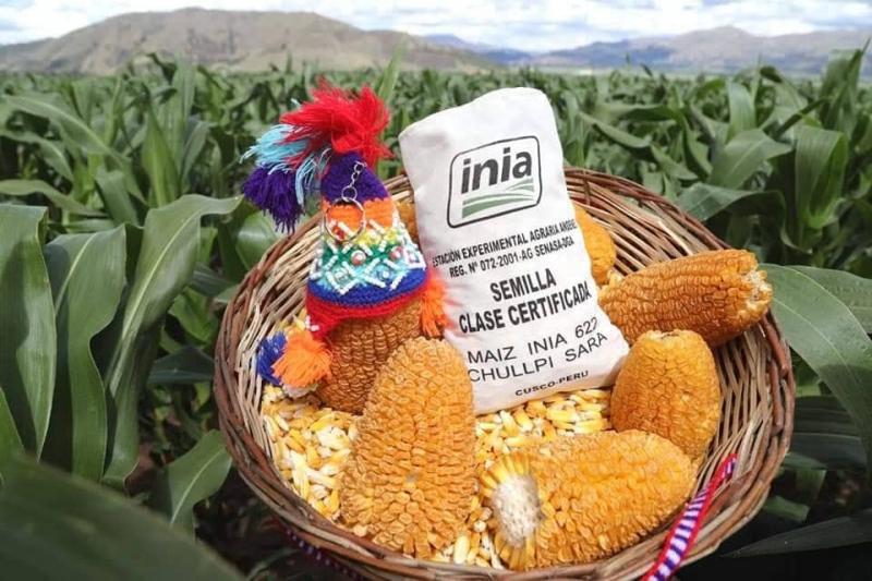 Minagri presentó primer maíz Chullpi Sara con certificación internacional
