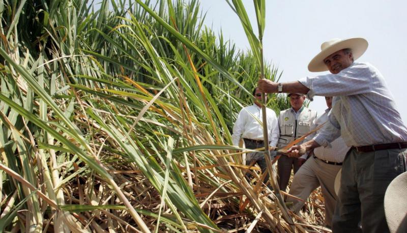 Minagri se comprometió a optimizar condiciones productivas de caña de azúcar