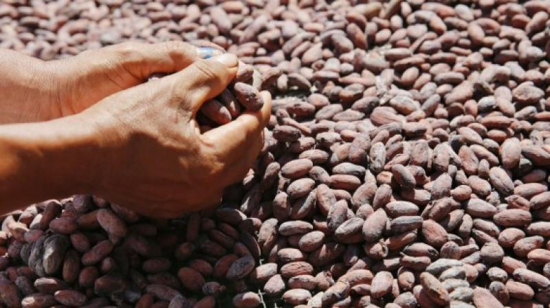 Mincetur admite impacto en futuras exportaciones de cacao ante próxima restricción europea