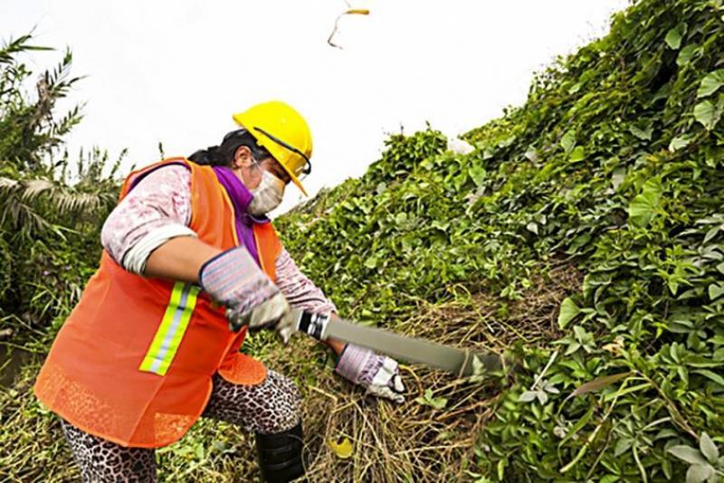 Mujeres rurales representan el 35% de jornales en mantenimiento y limpieza de canales y drenes