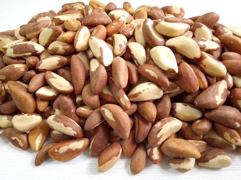 Notable caída en la exportación nacional de nueces de Brasil