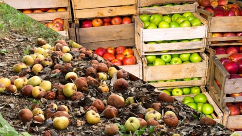 Nuevas tecnologías pueden evitar el desperdicio de fruta