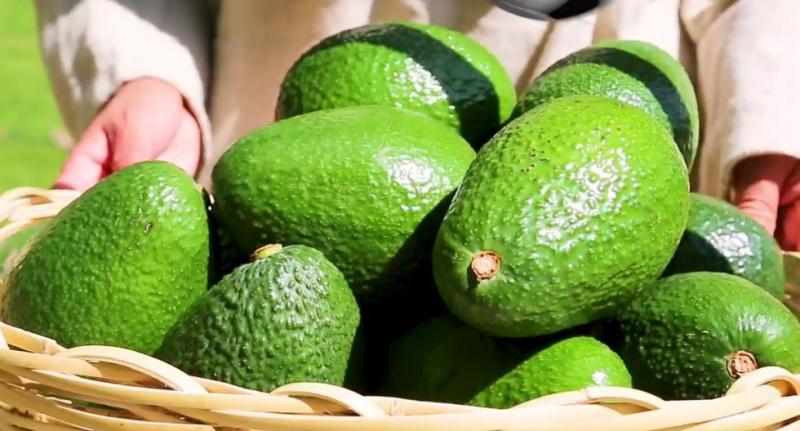 Paltas, algas, aceitunas, capsicum y cítricos, entre los productos peruanos con posibilidades de crecer en el mercado francés