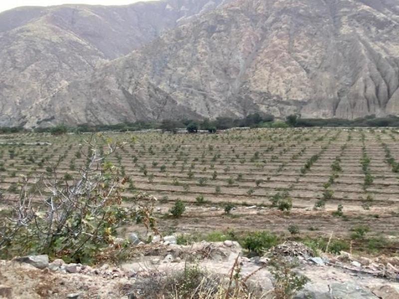 Pequeños productores a lo largo del país se han sumado a la cadena agroexportadora