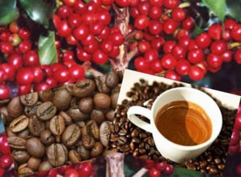 PERÚ ES EL CUARTO PROVEEDOR DE CAFÉ A COREA DEL SUR