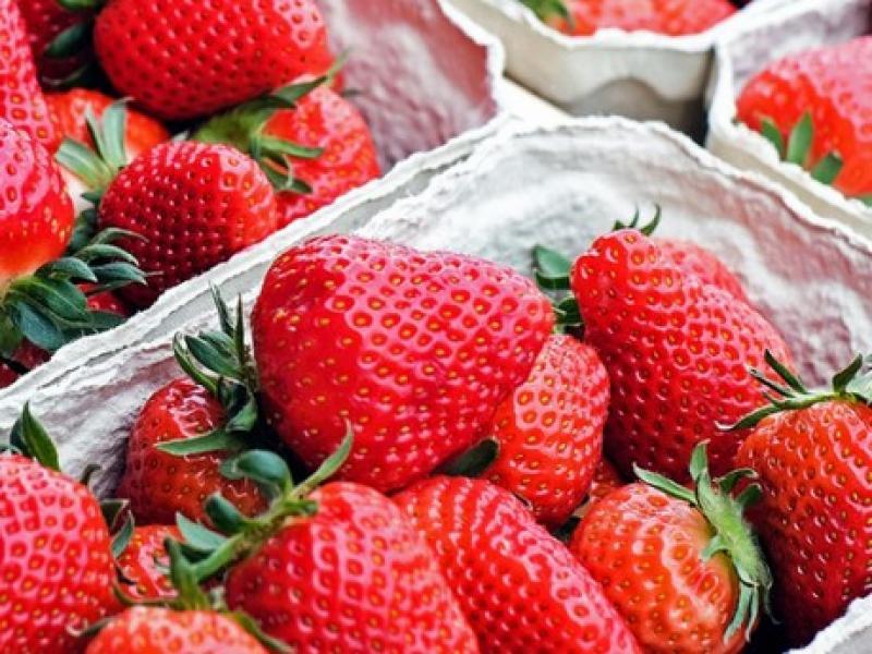 Perú exportaría entre 10 mil a 12 mil toneladas de fresas congeladas este año