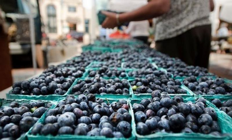 Perú exportó alrededor de 118 mil toneladas de arándanos frescos en la campaña 2019/2020