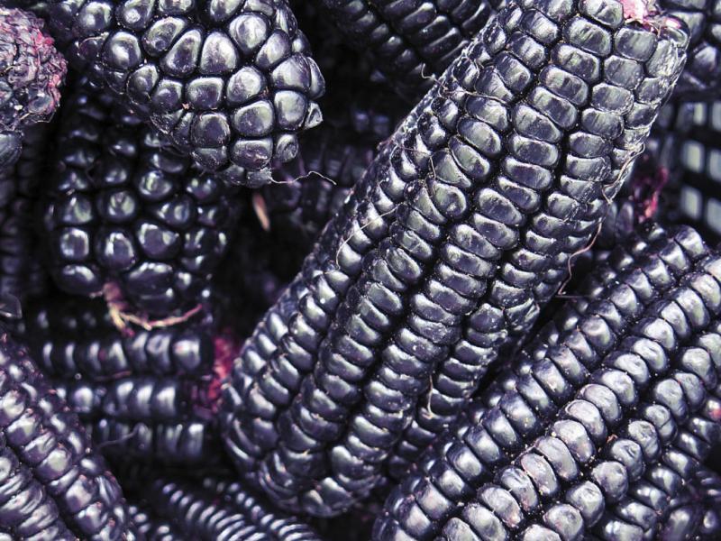 Perú exportó maíz morado por más de 1 millón entre enero y septiembre de este año